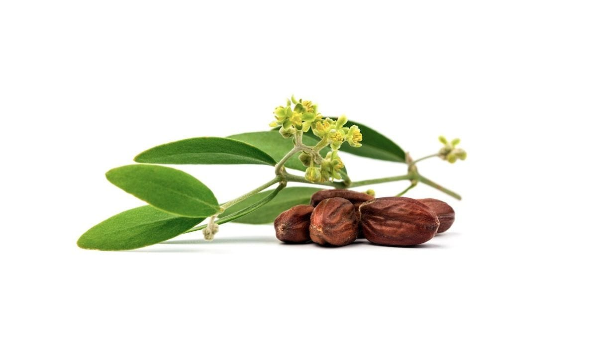 jojoba-oil-beard-benefits